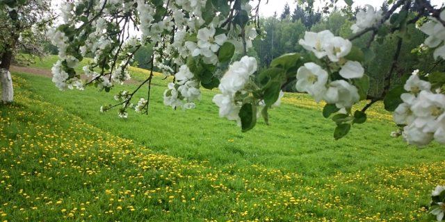 Kalnuotės eko-bendruomenė 2017 metai pavasaris