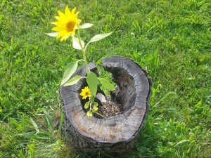 ZEGG bendruomenės gėlės